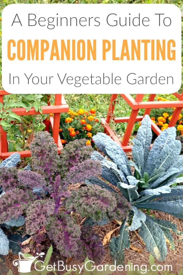 Companion Planting Is A Way Of Pairing The Best Vegetables To Grow  Together, That Benefit