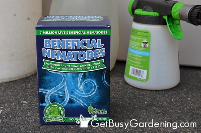 how to use scanmask nematodes