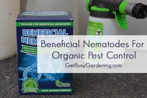 How to Use Beneficial Nematodes for Organic Pest Control in Your Garden
