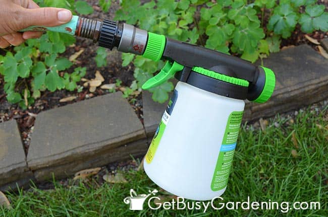 Spray Beneficial Nematodes Around The Yard