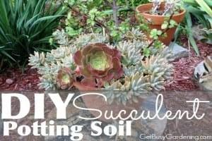 DIY Succulent Potting Soil (With Recipe!)
