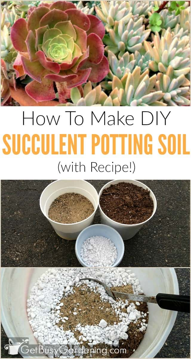 Diy succulent potting soil with recipe for Garden soil or potting soil