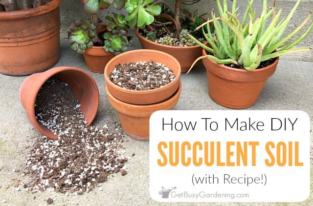 How To Make Your Own Succulent Soil With Recipe