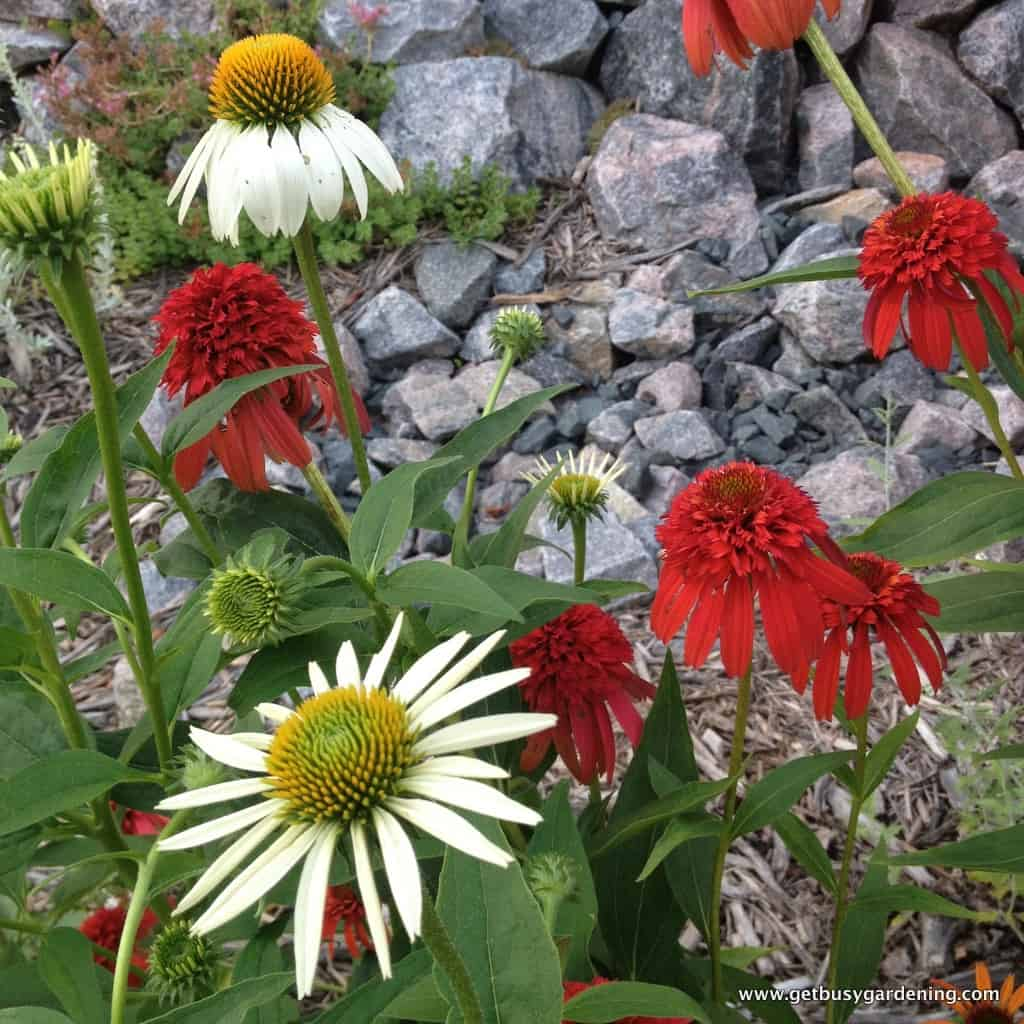 Plant Combinations in the Garden