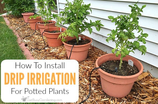 How To Build Diy Drip Irrigation System For Potted Plants
