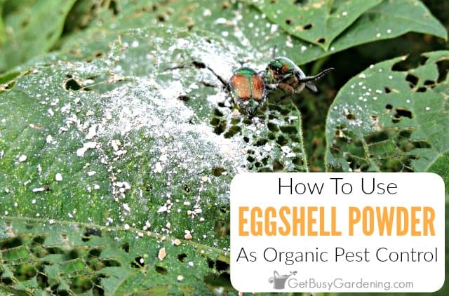 Using Eggshells as Organic Pest Control - Get Busy Gardening