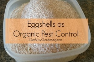 Eggshells Organic Pest Control