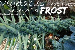 Vegetables That Taste Better After Frost