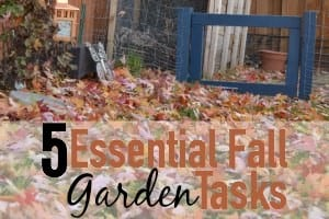 5 Essential Fall Garden Tasks
