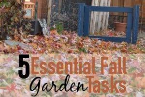 5 Essential Fall Garden Tasks
