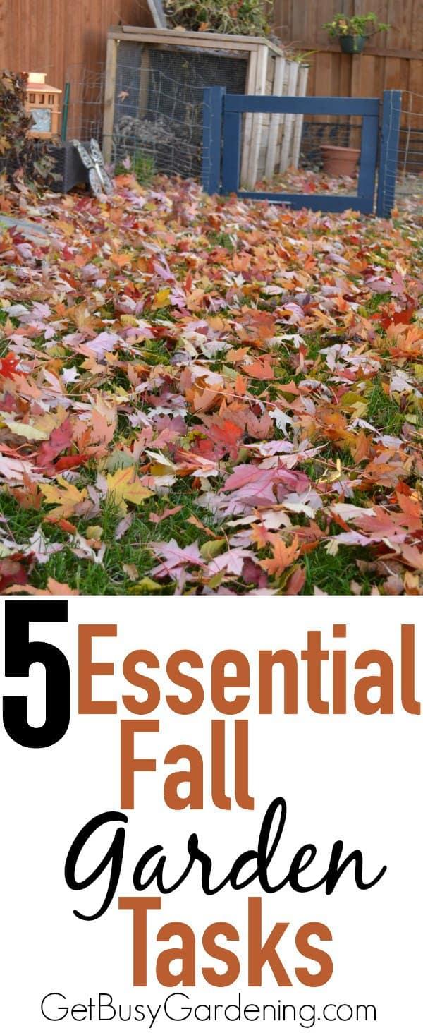 5 essential fall garden tasks - Fall gardening tasks ...