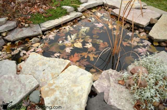 Winterize ponds and other garden water features in the fall