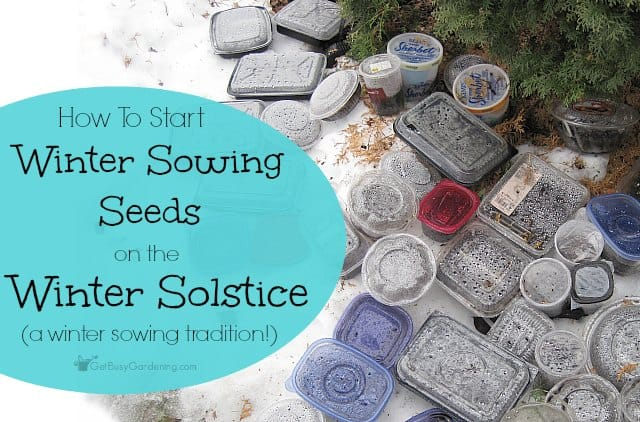 Winter sowing seeds on the winter solstice