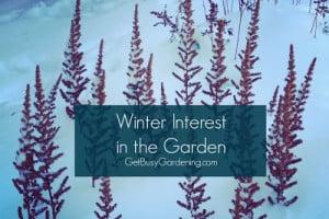 Winter Interest in the Garden