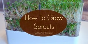howToGrowSprouts