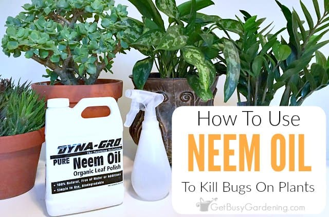 Neem Oil Insecticide: What Is It, And How To Use Neem Oil On