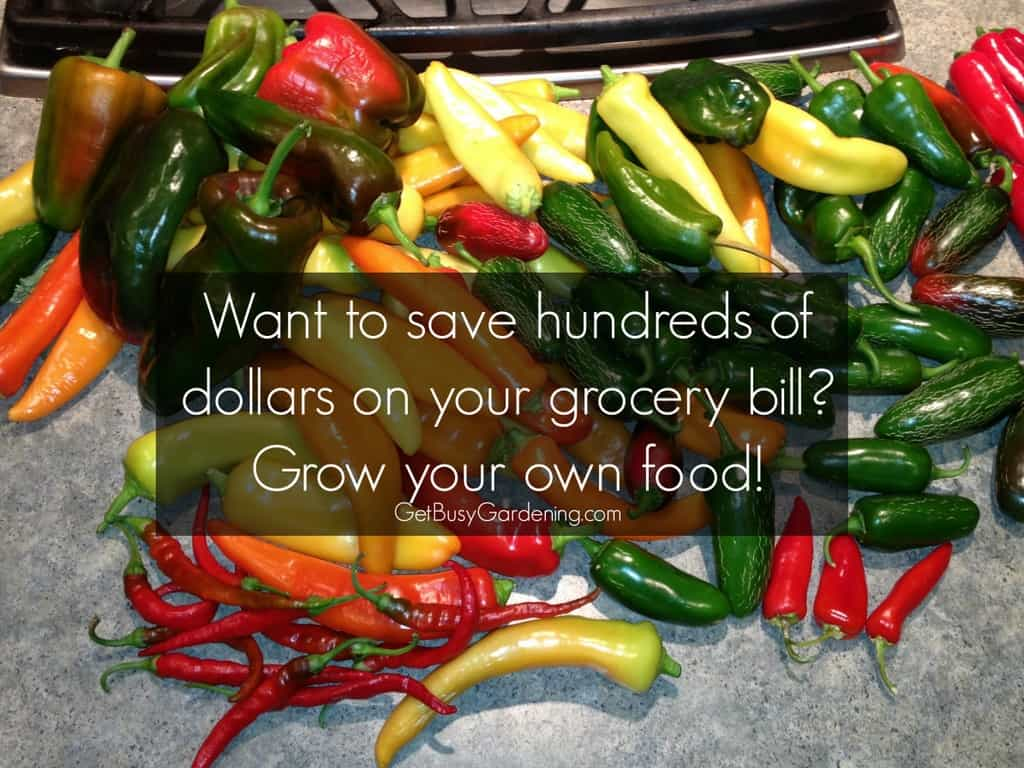 My Vegetable Garden Saved Me $600 in 2013