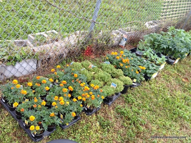 Plants ready for the community garden