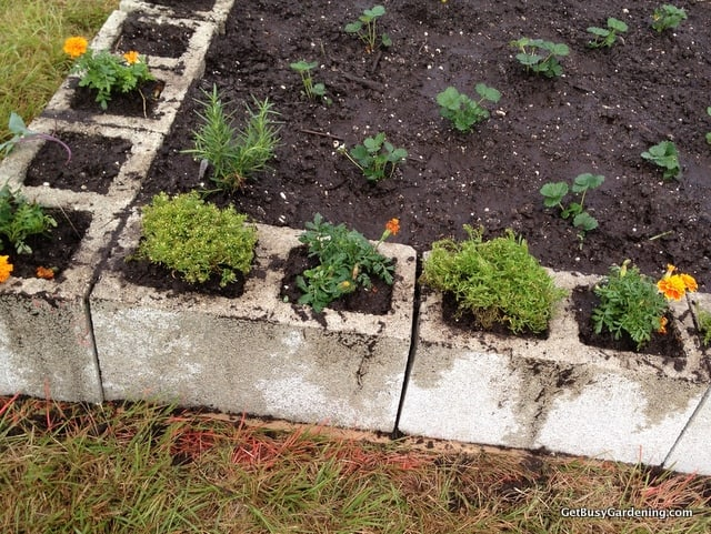 Companion planting in the cinder blocks