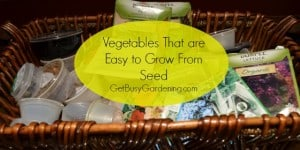 Vegetables Easy To Grow From Seeds