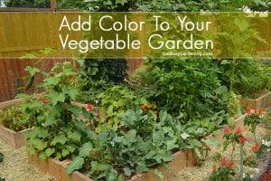 Add Color To Your Vegetable Garden