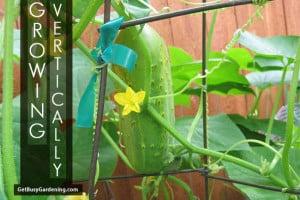 Growing Vertically