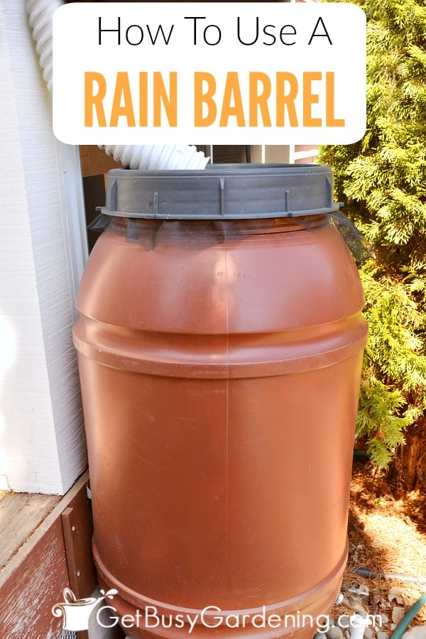 A rain barrel is a container that is used for rainwater harvesting. But how do rain barrels work? When it rains, the rain barrel will be filled with rainwater from the gutter downspout. Then the water will sit in the barrel until it's ready to be used. Learn more about how rain barrels work.