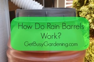 How Do Rain Barrels Work?