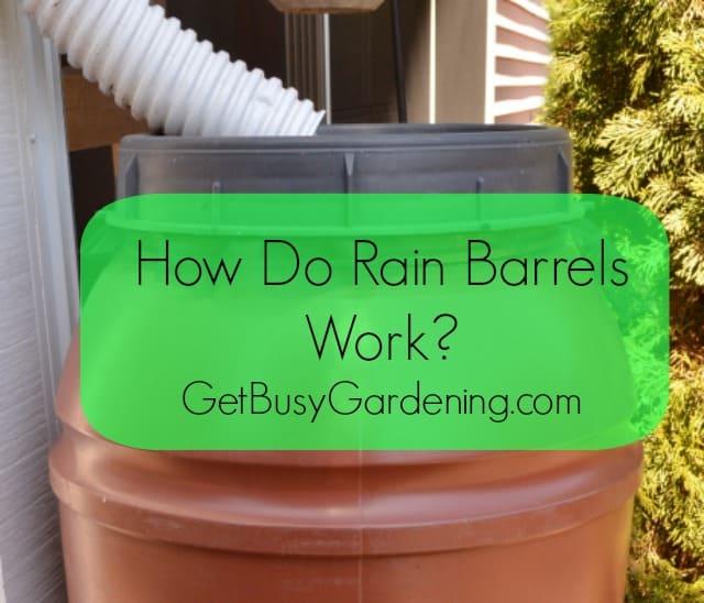 How Do Rain Barrels Work?