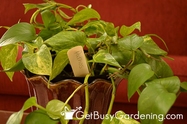 DIY plant markers used in house plants