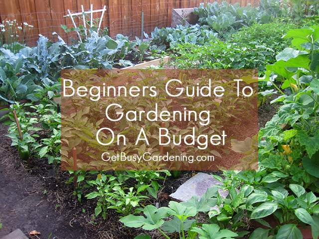 Beginners Guide To Gardening On A Budget