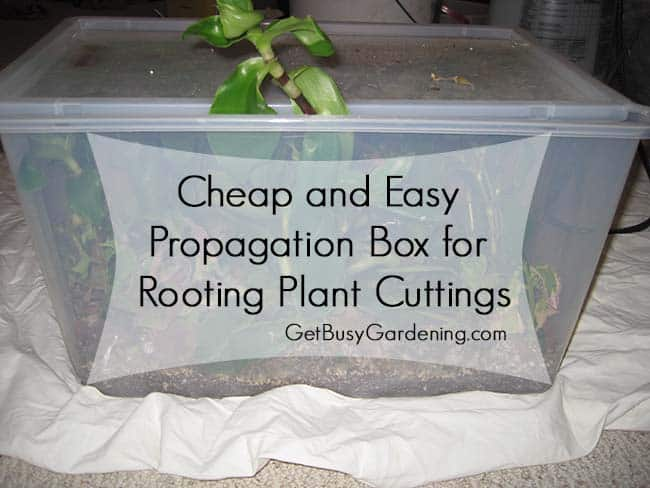 Cheap And Easy Propagation Box For Rooting Plant Cuttings