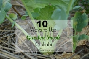 10 Ways to Use Garden Fresh Kohlrabi