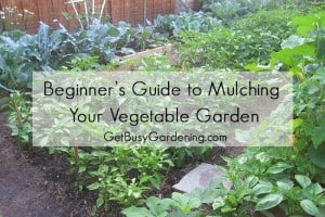 Beginner's Guide to Mulching Your Vegetable Garden