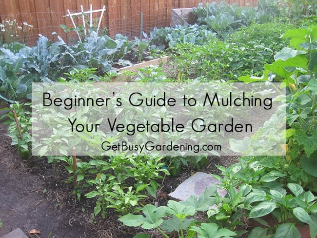 beginner's guide to mulching your vegetable garden, Natural flower