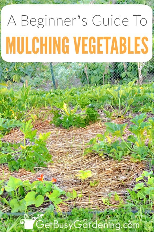 Beginner S Guide To Mulching A Vegetable Garden Get Busy Gardening