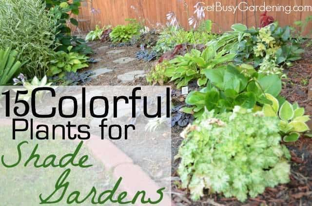 15 colorful plants for shade gardens get busy gardening for Garden trees for shade