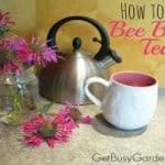 How To Make Bee Balm Tea