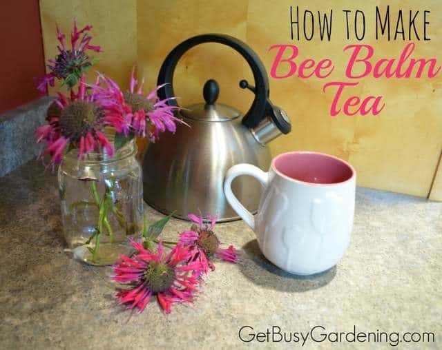 How To Make Bee Balm Tea
