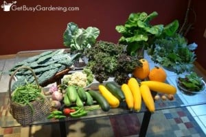 Kitchen Table Covered With Garden Harvests