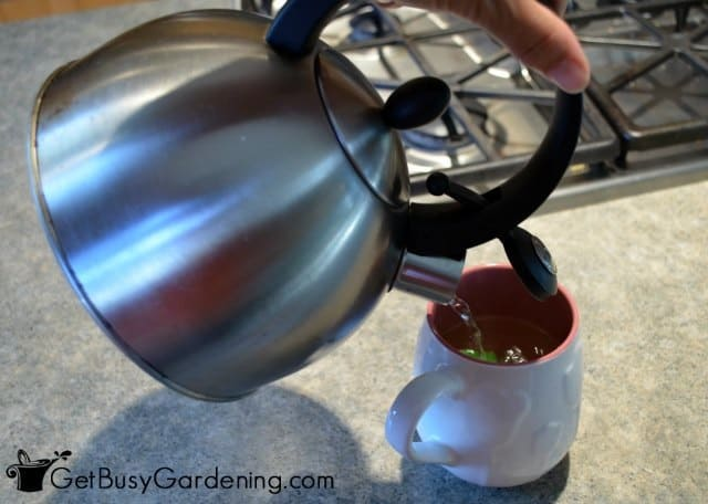 Pour Hot Water Over Fresh Or Dry Bee Balm Leaves