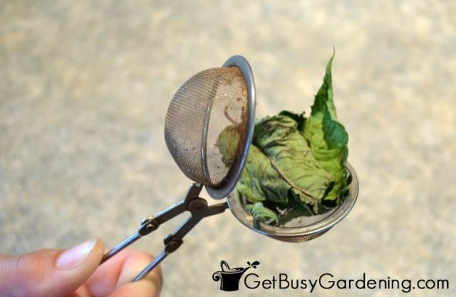 Put Dried Bee Balm Leaves In Tea Infuser