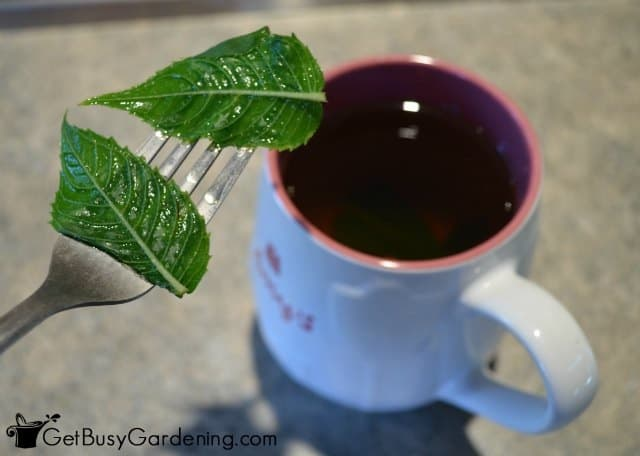 Strain Bee Balm Leaves From Tea And Enjoy