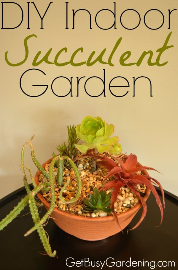 Succulents make great houseplants, and it's easy to make your own DIY indoor succulent garden. Here are step by step instructions with photos.