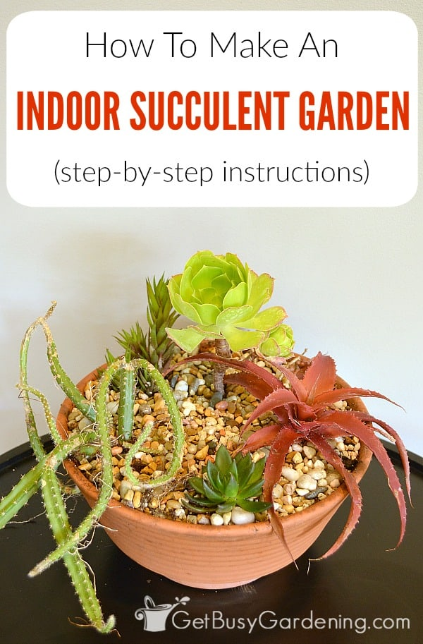 Creating a succulent container garden is fun and easy! Here are simple step-by-step instructions for making an indoor succulent garden of your own.