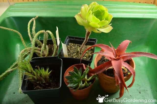 Select Your Indoor Garden Plants