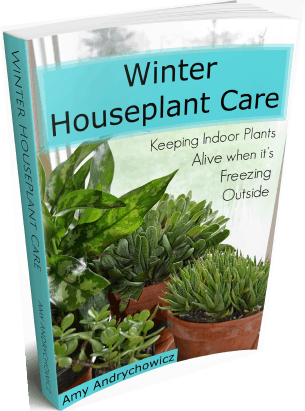 Winter houseplant care eBook