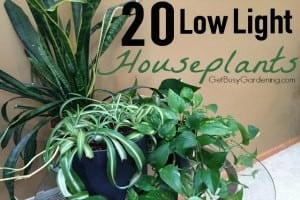20 Low Light Houseplants