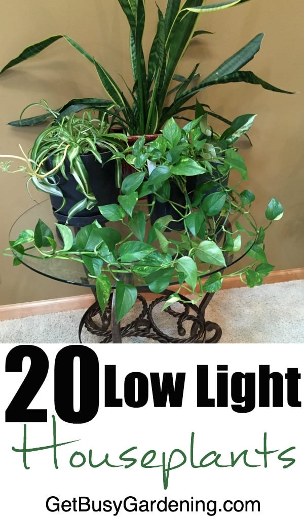 20 low light houseplants that are also easy to grow - Low light indoor plant ...