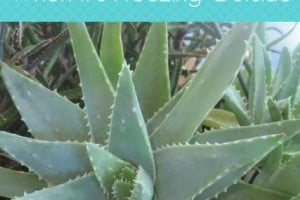 Winter Houseplant Care eBook Cover